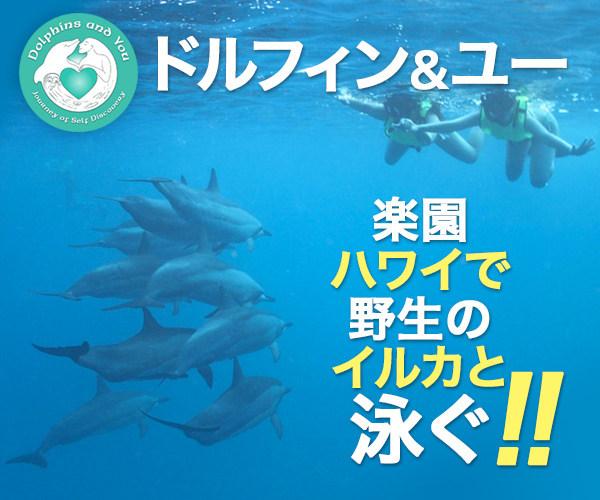 ハワイおすすめスポット・野生のイルカと泳ぐ